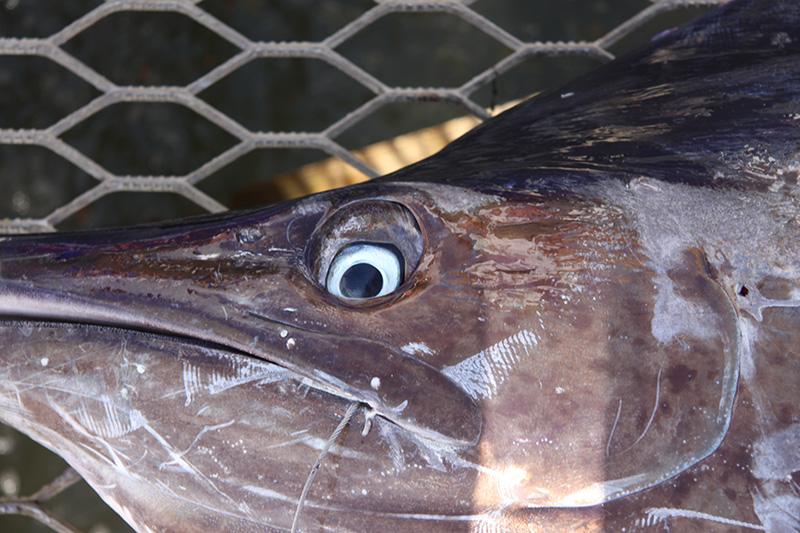 когда клюет рыба в городе бийске